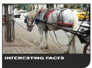 Interesting Carriage Horse Facts