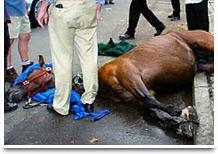 NYC carriage horse accident